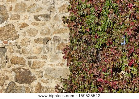 Background image of half stone wall and half climbing plants.
