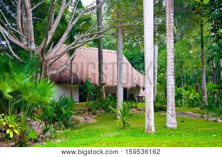 Hut in Jungle in Mexico Yucatan penninsula