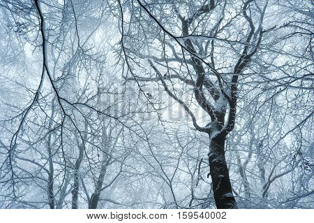 Magical winter forest in a cold winter scene