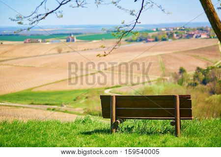 Bench With The View