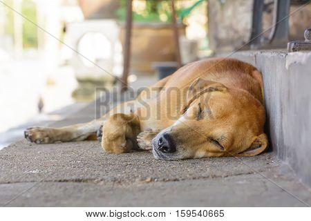 The Dog Sleep