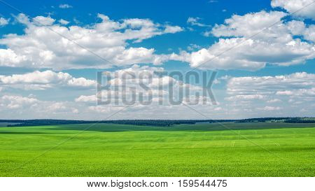 Beautiful farm field grasses sown in summer