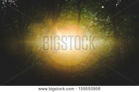 Blinding sunlight breaking through a dark forest landscape.