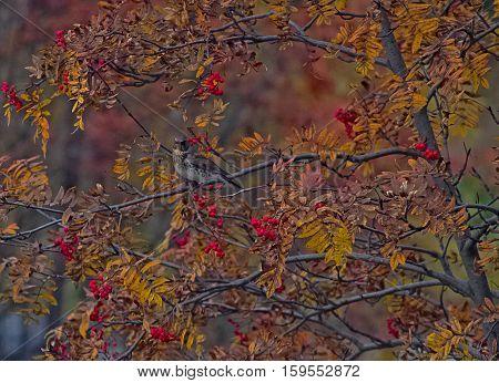 motley world. autumn garden outdoor tree wonderland