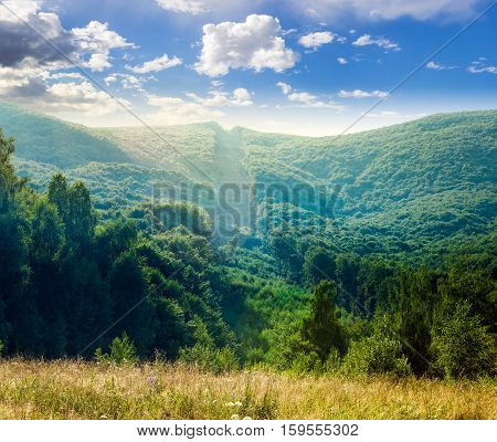Trees Near Valley In Mountains