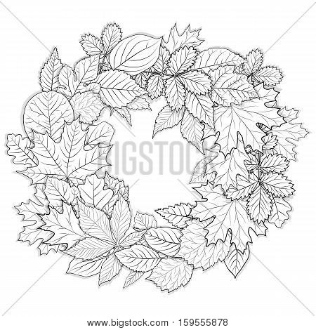 Leaves set for coloring page on white background  vector