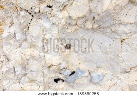 Makes a great background shot and shows a snail on the cliff face and some flint rock.