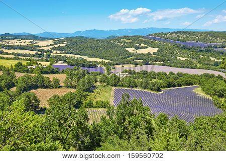 Beautiful Blooming Lavender Fields
