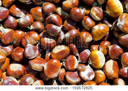 The background of many fresh and ripe chestnut