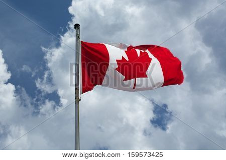 A Canadian Maple Leaf Flag flies proudly over the top of Sulphur Mountain against a fluffy white cloud in a bright blue sky. Banff National park, Alberta, Canada