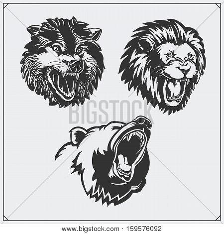 Illustrations of wild animals. Bear, lion and wolf.