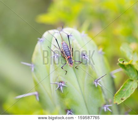 Katydids are found in Mexico. Similar to grasshoppers, you can find them in grasslands, prairies, meadow and other grassy or weedy areas, especially near swamps, creeks, and other damp areas.