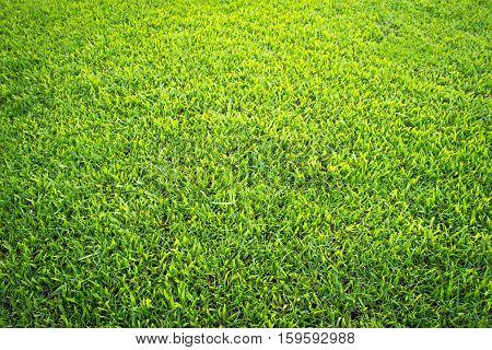 Green grass texture from a field / grass nature background