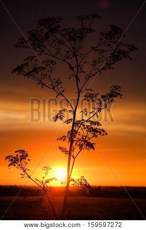 grass at sunset vertical frame sky, coast