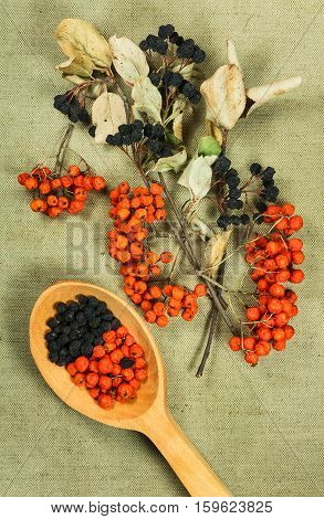 Rowanberry Chokeberry aronia. Dried herbs for use in alternative medicine spa herbal cosmetics herbal medicine preparing infusions decoctions tinctures powders ointments butter tea bath.