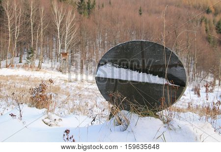 headstone on the dog cemetery and view on the landscape with bryony on the edge of forest in winter