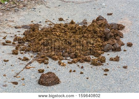 Big horse droppings on an asphalt road