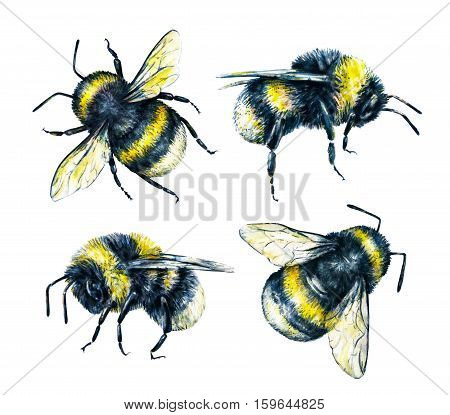 Set of bumblebees on a white background. Watercolor drawing. Insects art. Handwork