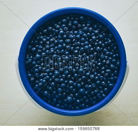 Bilberry in the bucket in summer time
