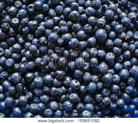 Background photo with many bilberry in summer time