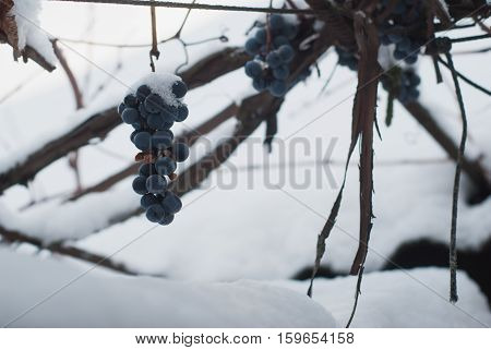 Vineyards In Winter,