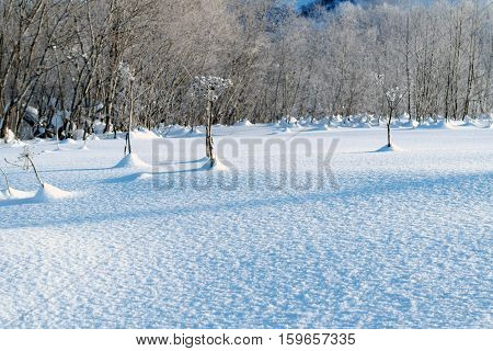 Texture of the snow. Snowcapped trees. Sunshine