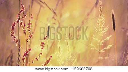 Banner of blooming grass and pollen in Summer
