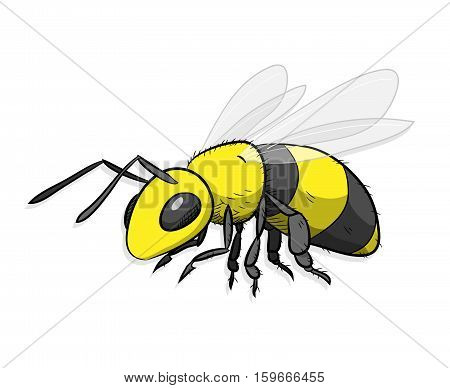 Bee Hornet Wasp Insect. A hand drawn vector cartoon illustration of a yellow bumblebee.