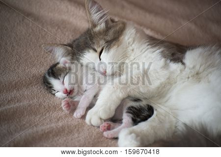 A Cat sleeping with kitten and hugs him