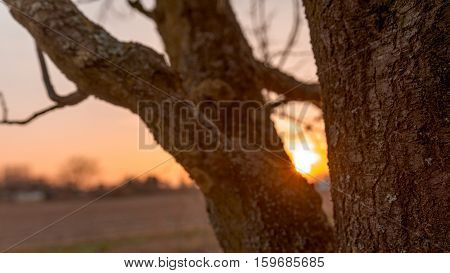 Sunrays between thick branches of a tree