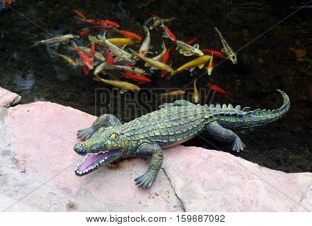 Green Plastic Crocodile lies on the bank of a pond with goldfish