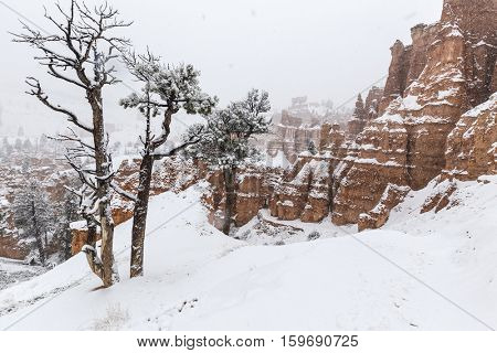Heavy falling snow at Bryce Canyon National Park in Southern Utah.