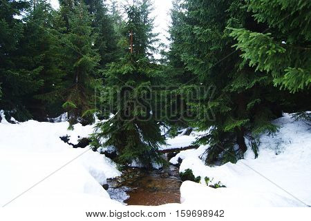 a mountain stream covered by snow in the polish karkonosze mauntains