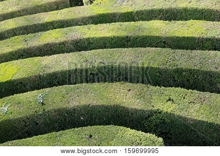Details Of Thick Hedges Of A Difficult Maze Of A Garden