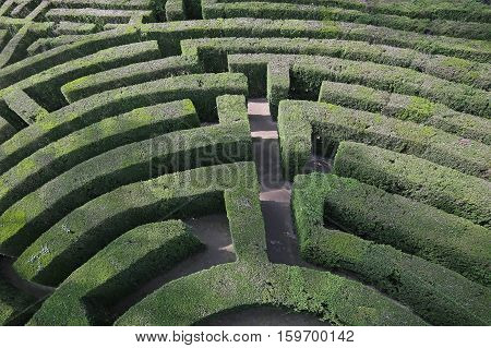 Intricate And Complex Maze Of Hedges