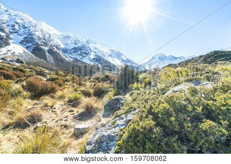 Dry Weed Grass with sun flare on Aoraki Mount Cook National Park Canterbury region South Island New Zealand.