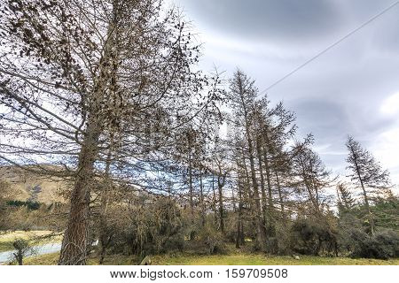 Fine tree at street at glentenner campsite New Zealand