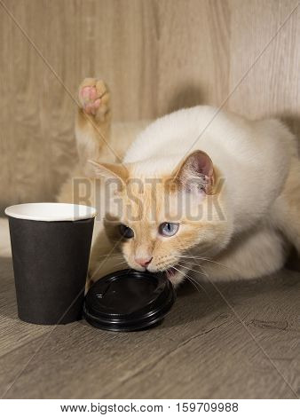 white young cat with a Cup of coffee playing tired drinks from a Cup knocked over the empty glass in the morning before work