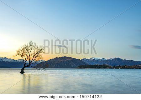 Tree during sunset at Wanaka Lake New Zealand