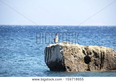 Cormorant / The Aegean Sea. Coast of the Aegean Sea on a Greek island of Kos.