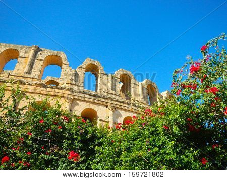 El Jem amphitheatre at sky background  with flower tree