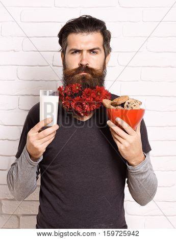 handsome bearded man with stylish mustache and long beard with red autumn flowers on serious face holding glass of milk with chocolate chip cookies on white brick wall background