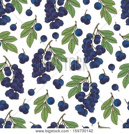 Vector hand drawn seamless pattern with berries ( bilberry blueberry)