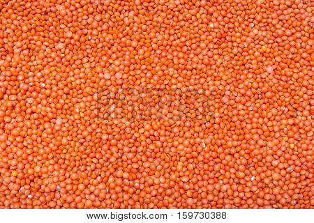 dry red lentil closeup, background or texture