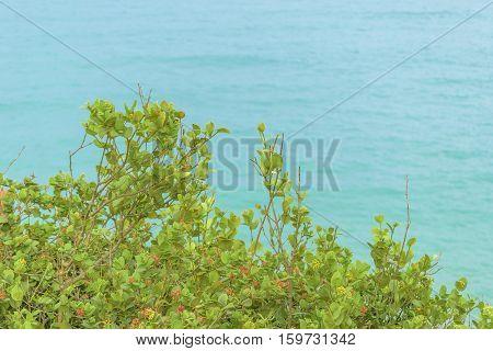 Plants At Highs Aerial Landscape Scene