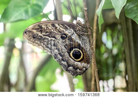a butterfly with eye spot on plants