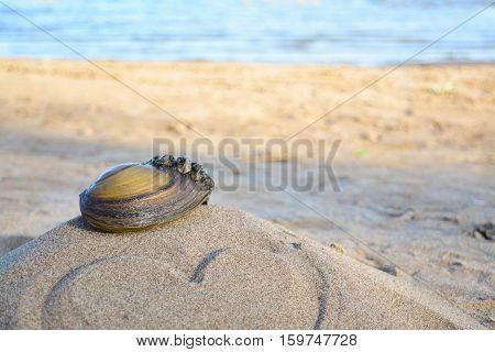 seashell on sand with love, Volga river Russia