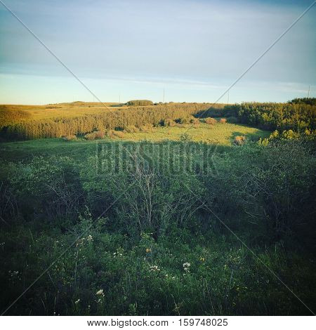 Autumn field landscape with lush green grass and sunshine on hills in background at sunset. Grey clouds and light blue sky over hills. Thick forest tress and lush green grass on hills.