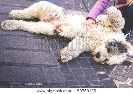 Happy and cute dog laying down - A female is cuddling the dog