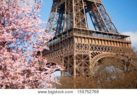 Spring In Paris. Blossoming Cherry Tree And Eiffel Tower. Focus On The Eiffel Tower